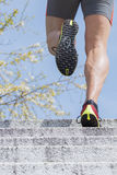 Läufertreppen-Frühlingszeit Stockbilder