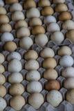Låda två av ägg Arkivfoto