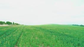 Låg flyg- sikt av ren grön gräsmatta Billopp 4K arkivfilmer