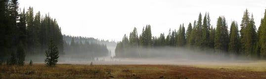 Låg-hängande dimma över en äng Royaltyfri Fotografi