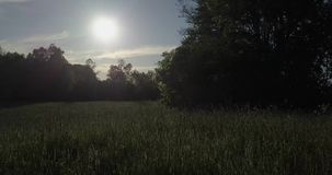 Låg-tangent drömlikt skott Surret flyger in mot solbottenläget i fältet som medföljs av tusentals kryp arkivfilmer