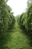 låg tyst tree för grön lane Arkivfoto