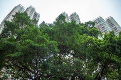 Låg vinkel av det nya gröna trädet i bostads- område på byggnader och himmel med solljusbakgrund royaltyfri bild