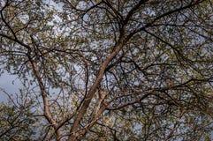 Låg vinkel av ett träd royaltyfria foton
