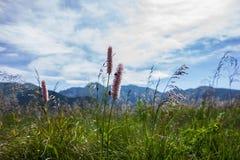Låga Tatra berg Arkivbilder