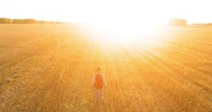 Lågt flyg över turisten för ung man som går över ett enormt vetefält lager videofilmer