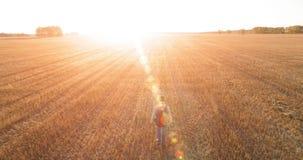 Lågt flyg över turisten för ung man som går över ett enormt vetefält stock video