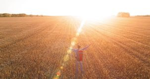 Lågt flyg över turisten för ung man som går över ett enormt vetefält Händer upp, för vinnare, lycklig och frihetsbegrepp lager videofilmer