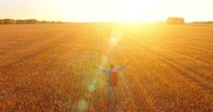 Lågt flyg över turisten för ung man som går över ett enormt vetefält Händer upp, för vinnare, lycklig och frihetsbegrepp arkivfilmer