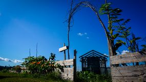 Lågt skott av trädgården och växthuset arkivbilder