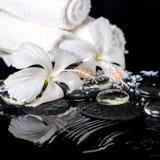 Lågtemperatur- brunnsortstilleben av den delikata vita hibiskusen, zenstenar Royaltyfria Bilder