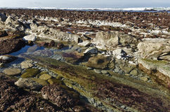 Lågvatten på den Atlantic Ocean kustlinjen av det franska baskiska landet royaltyfri foto