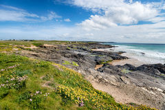 Lågvatten på fjärden för dumskalle` s i Cornwall Fotografering för Bildbyråer