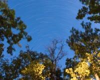 Lång exponering av stjärnaslingor på natten i en röjning i skogen i regulatorn Knowles State Forest i Wisconsin royaltyfri fotografi