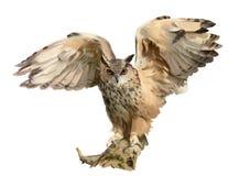 Lång-gå i ax Owl Vifta med dina vingar grupper som tecknar spolning för vattenfärg för blomningflodtrees arkivbilder