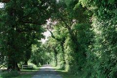 Lång gata som fodras med stora gröna träd Arkivfoto