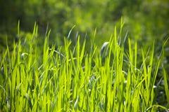 Lång gräsbakgrund royaltyfria foton