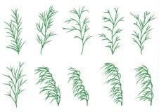 Lång gräsuppsättning Arkivbilder
