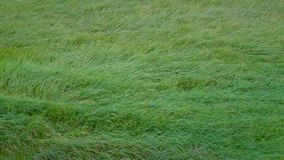 Lång inflyttning för grönt gräs vinden lager videofilmer
