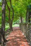 Lång korridorträdgård Arkivbild