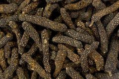 Lång peppar (pipblåsarelongumen) Arkivfoto