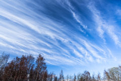 Lång skyscape för cirrusmolnmoln Arkivbild