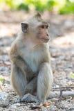 Lång-tailed macaque, i Thailand, Saraburi en djurlivfristad, Fotografering för Bildbyråer