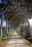 Lång tillfartsväg med träd Arkivfoto