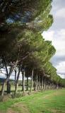 Lång tillfartsväg med träd till lantgården Royaltyfria Foton