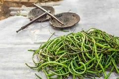 Långa bönor för organisk gård på den asiatiska marknaden Arkivbilder