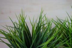 Långa blad av grönt gräs på wood bakgrund arkivfoto