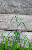 Långa blad av gras Royaltyfria Foton