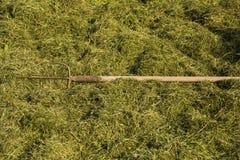 Långa gafflar på fältet i hö Royaltyfri Bild