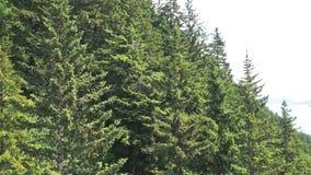 Långa glidningträd lager videofilmer