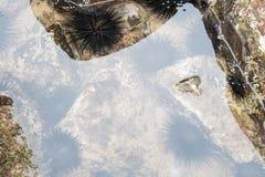 Långa inbindningshavsgatubarn på vagga i havsvattnet ytbehandlar Royaltyfri Bild