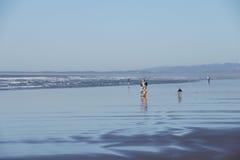 Långa inrullande havsvågor undersöker den sandiga stranden Royaltyfri Bild