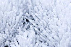 Långa iskristaller Royaltyfria Foton