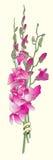 Långa orkidér som gifta sig inbjudan Arkivbilder