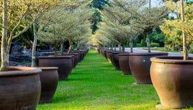 Långa rullträd i krukan Royaltyfri Fotografi