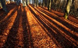 Långa skuggor av träd Royaltyfri Foto