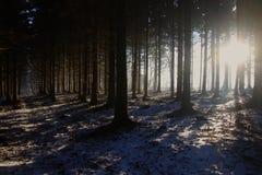 Långa skuggor på skoggolvet Arkivbilder