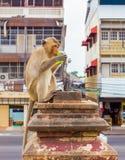 Långa tailed macaqueapor som kopplar av på den Prang Sam Yot templet, fördärvar Lopburi Thailand loppdestinationer Royaltyfria Bilder