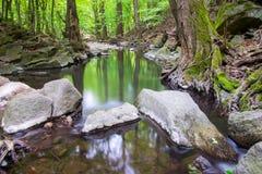 Långsam flod i skogen royaltyfri fotografi