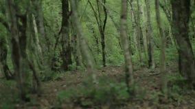 Långsam panorama av den mörka skogen med stammar och rotar arkivfilmer