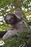 'Långsamt' sengångaren Arkivfoton