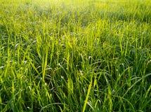 Långsträckta sidor av gräs och växter i ett fält på en solig morgon arkivbilder