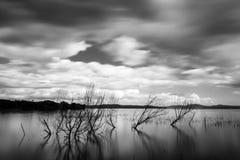 Långt exponeringsfoto av en sjö, med träd och kommande ou för filialer Arkivfoton