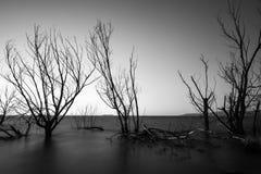 Långt exponeringsfoto av en sjö på skymning, med träd och filialer c Arkivbilder