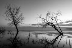 Långt exponeringsfoto av en sjö på skymning, med träd och filialer c Royaltyfria Bilder