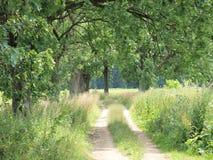 Långt gammala trees Arkivfoto